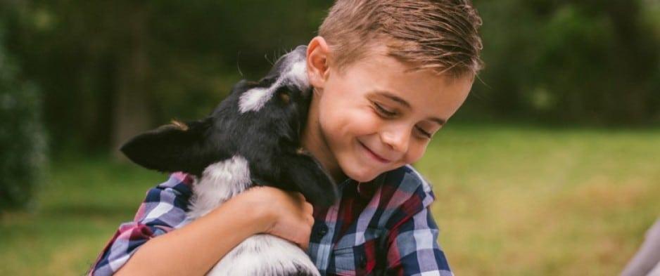Phobie des chiens d'un enfant. Traitement par TCC